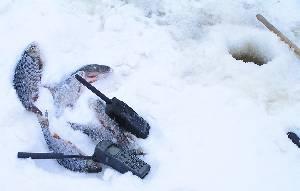 Турайя необходима даже рыбакам